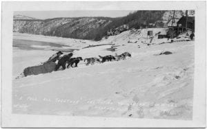 A pull all together: freighting to Manson, 200 miles [from] Hazelton, B.C.