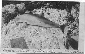Porpoise on the rocks, Skeena River