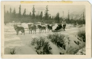 Nurses riding in a dog sled